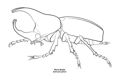 japanese beetle coloring page drawn beetles rhinoceros beetle pencil and in color