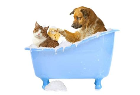 how early can you bathe a puppy bathing your cat and getting the cat to like it accendo press pet news