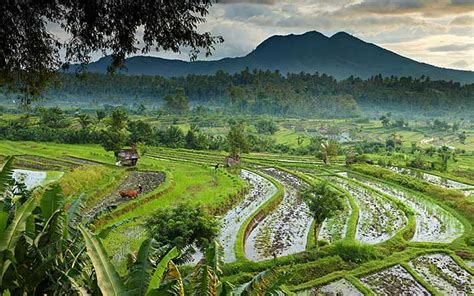 bali readers tips recommendations  travel advice