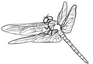 dragonfly coloring page free coloring pages of dragonfly