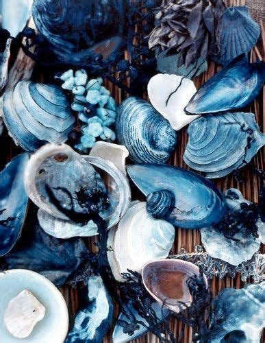 color shell blue sea shells color beautiful sea