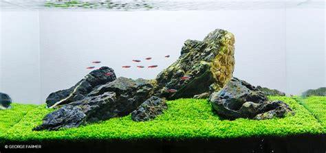 cara membuat aquascape gaya iwagumi panduan membuat gaya aquascape iwagumi