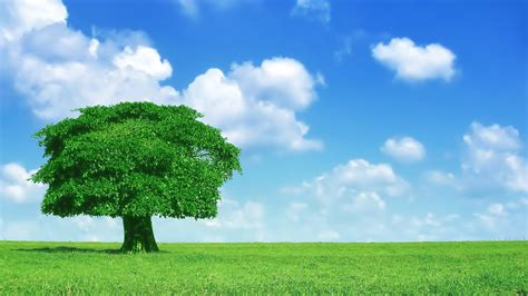 wallpaper for walls trees lonely tree wallpaper 1164