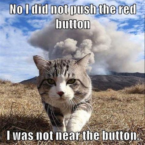 Cheezburger Meme - i can has cheezburger caption funny internet cats