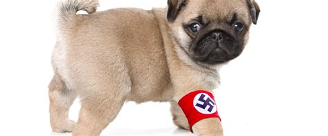 natzi pug scottish arrested after teaching his s to sieg heil tablet