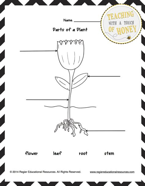 Classroom Freebies Too Freebie Label The Plant Tiered Templates Plant Label Template