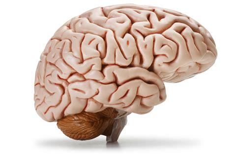 brain images research traumatic brain injury c3nl