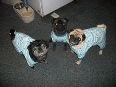 dubstep pug pugs and frenchies