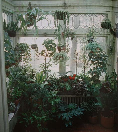 1000 images about jungle room on jungle room