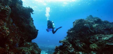 underwater dive bali underwater dive in padangbai bali ok divers