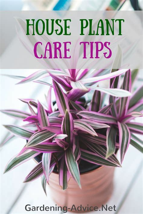 indoor house plant care   care  common