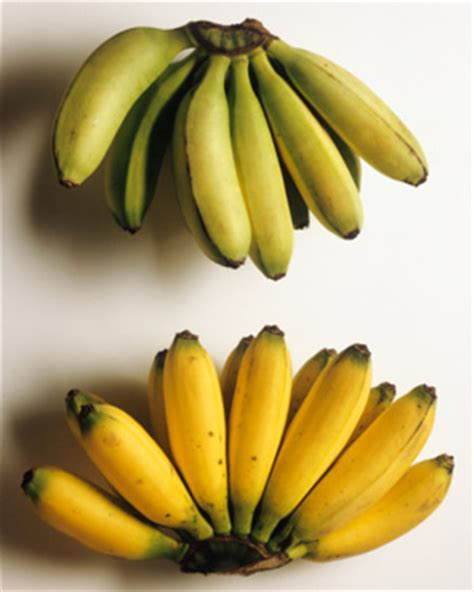 small banana vs regular banana difference redflagdeals com forums bananas organic vs conventional popsugar fitness