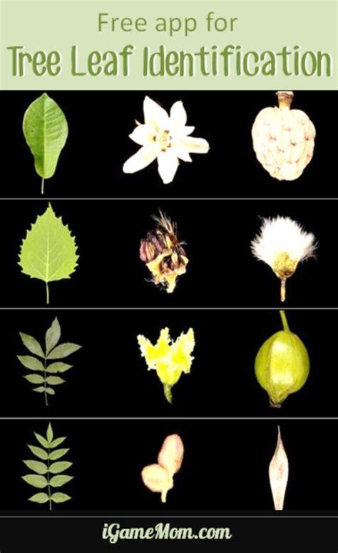 by leaf oplin ohio public library information network what tree is it beatiful tree