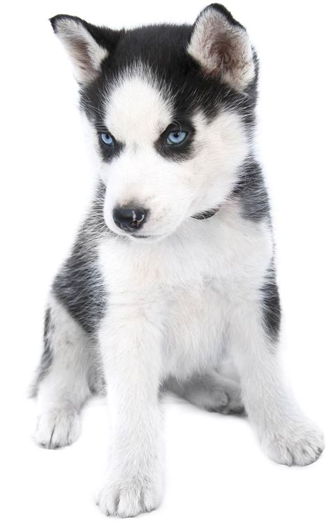 puppy names unique unique names 300 and inspiring ideas