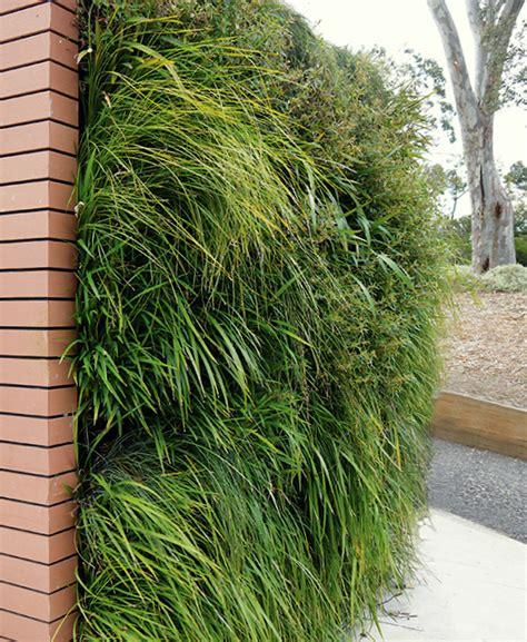 australian grasses vertical garden florafelt vertical