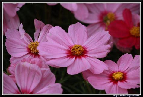 flower photos august 2011 prime photos august 2011