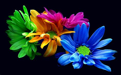 wallpaper for mobile colorful flower flowers 01 colorful petals versionone 120729