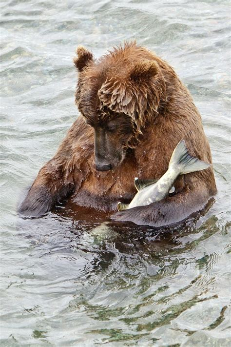 imagenes interesantes de animales fotos divertidas de animales interesantes tennis lucy
