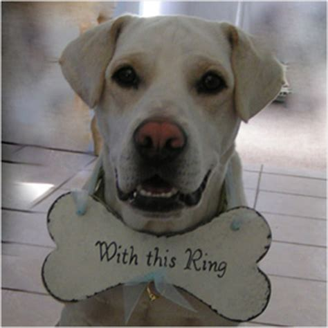 Wedding Accessories For Dogs by Must Wedding Accessories For Pets