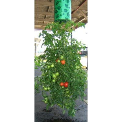 topsy turvy tomato planter topsy turvy tomato flower and vegetable planter the green