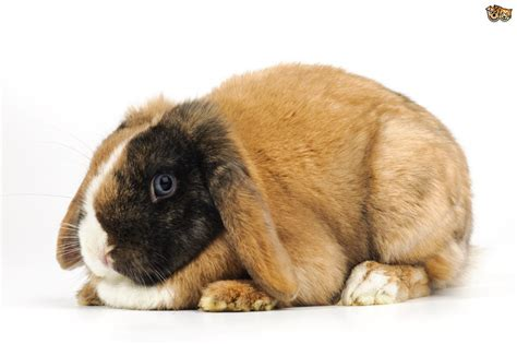 is your rabbit overweight or maybe obese pets4homes