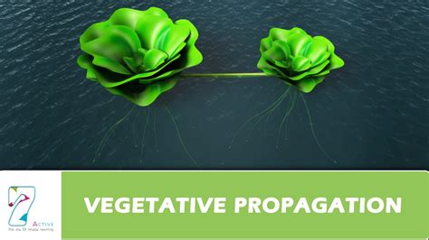 vegetative propagation by roots vegetative propagation
