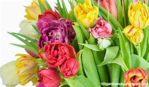 bunga tulip morfologi jenis  manfaatnya gambar bunga