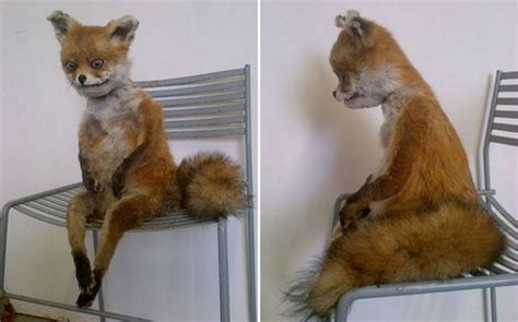 Taxidermy Fox Meme - crappy taxidermy interview with adele morse creator of