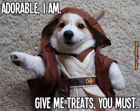 Adorable Meme - adorable dog memes image memes at relatably com