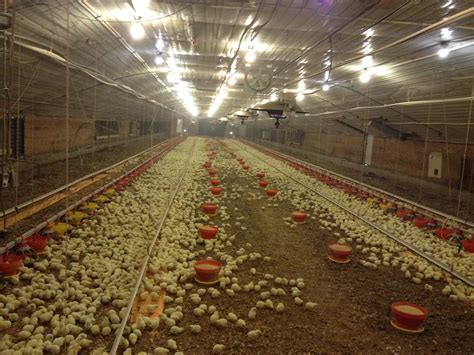 Make Your Own Floor Plans by Uabroilerfarm The University Of Arkansas Applied Broiler