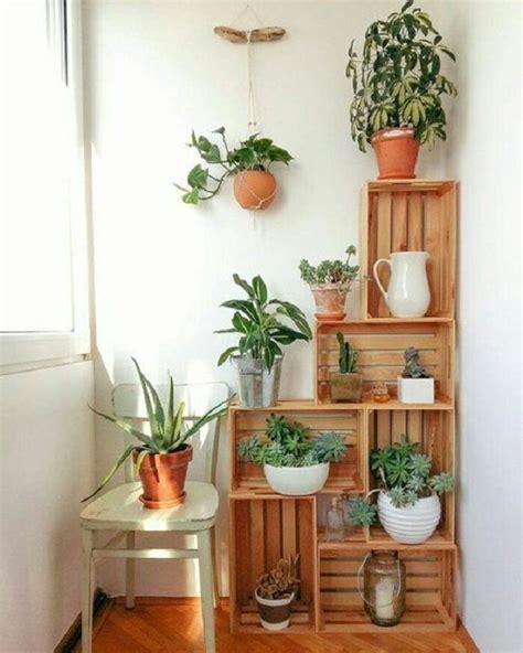 bikin rumah lebih hidup  diy tanaman hias  ampuh
