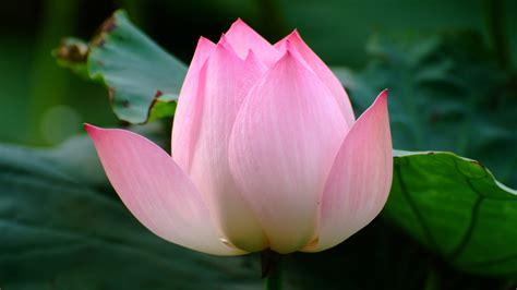 lotu s lotus s of fairhope