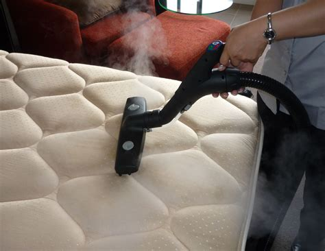 will steam kill bed bugs learn how to remove bed bugs in your home