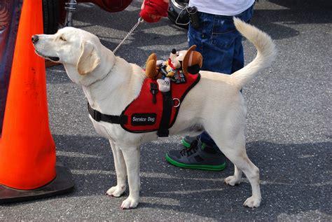 service dogs ma service banned from school popsugar