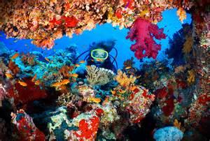 les 6 plus belles barri 232 res de corail du monde e voyageur