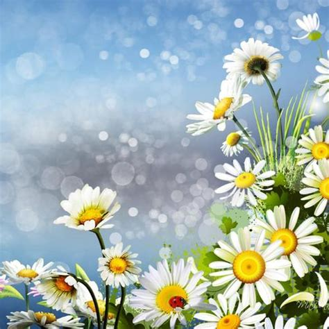 bunga aster gambar animasi apk  gratis