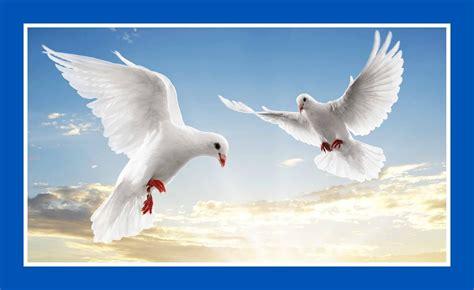 Tirai Burung Dan Sepasang Kekasih koleksi dp bbm bergerak burung kumpulan gambar meme lucu