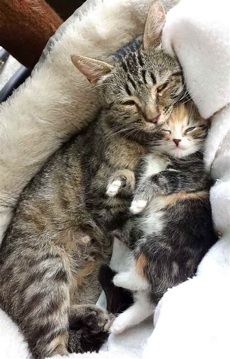 Stray Cat And Kittens In Backyard by Stray Cat Brings Home The Cutest Ever And It S Just Heartwarming The Meow
