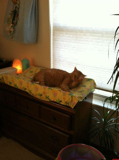 the bed you made for me thanks for the new bed you made just for me cute cats