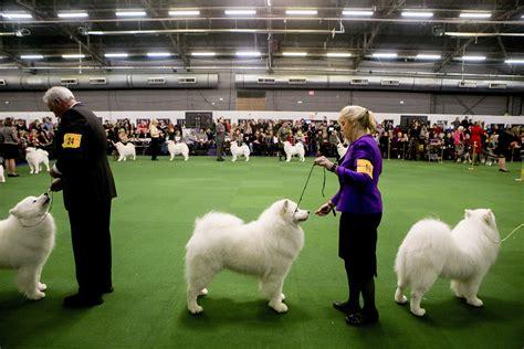 show winner westminster show breed winners best pics in show fallinpets