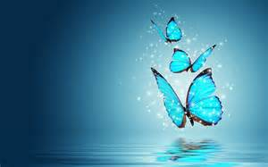 blue butterfly water reflection hd wallpapers download
