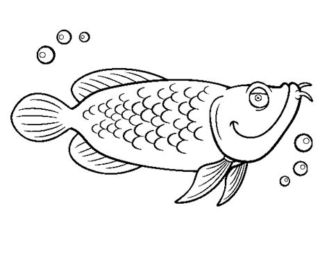 coloring pages of cod fish atlantic cod coloring page