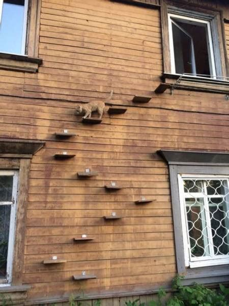 how to let your cat out if you live on the second floor