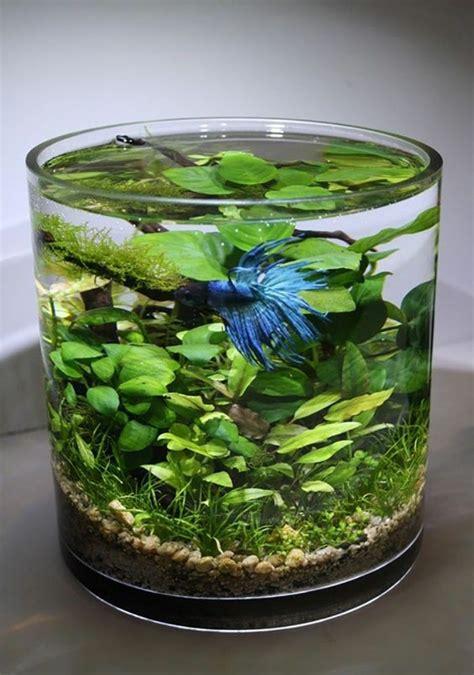 la plante aquatique decoration interieur  exterieur