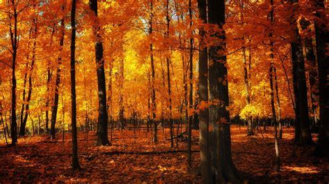 orange leafed autumn trees hd orange aesthetic