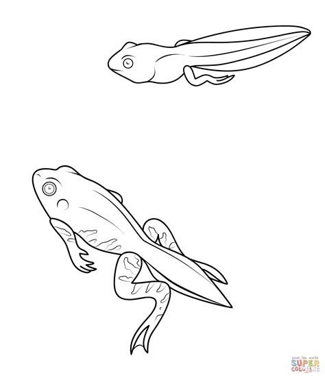 tadpole and froglet coloring page free printable