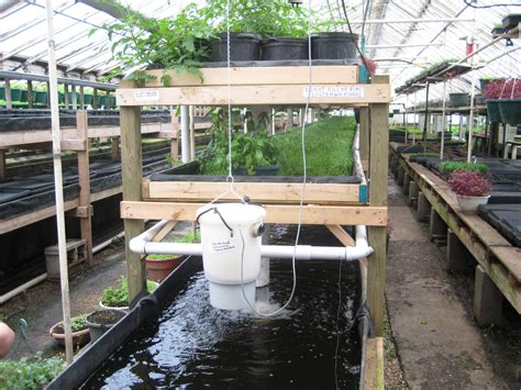 aquaponic gardening how to growing fish and vegetables