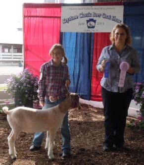 judge sherri stephens weak steele boer goats