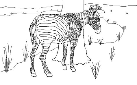 stripeless zebra coloring page tiger without stripes coloring page coloring pages