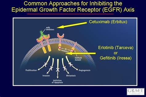 egfr inhibitors compare egfr inhibitors egfr grace treatments symptom management part 2